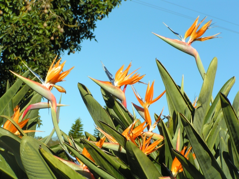 birds of pzarzadise 2.jpg
