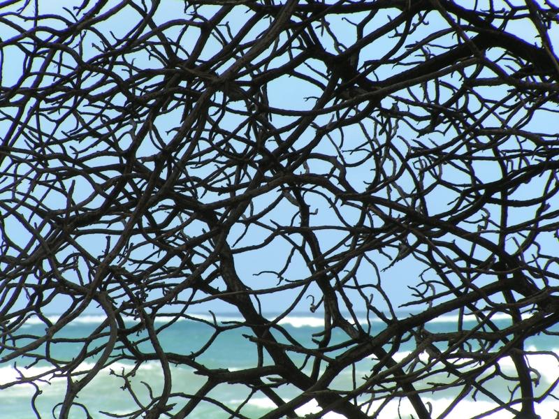 branches 2.jpg