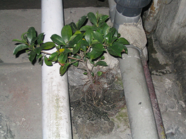 plant that grows in cement.JPG