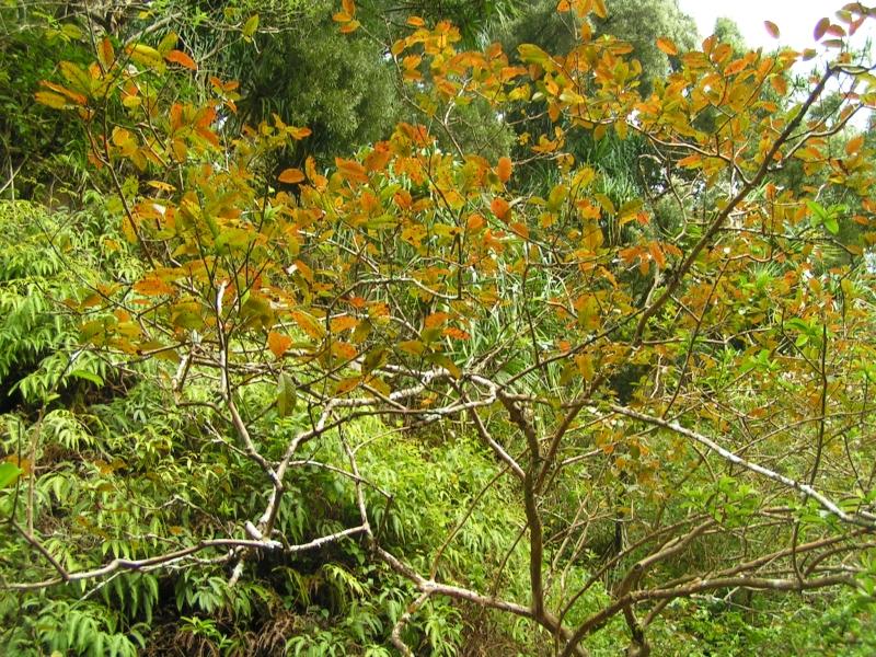 tf trees 13.jpg