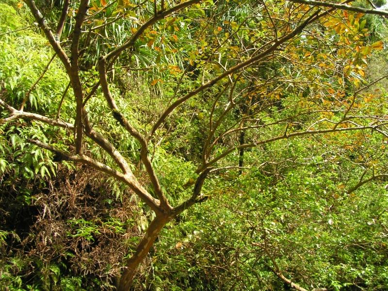 tf trees 14.jpg