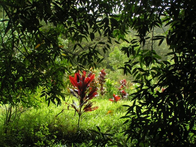 tf trees 16.jpg