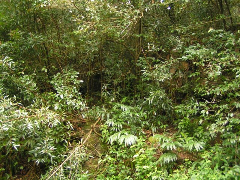 tf trees 17.jpg