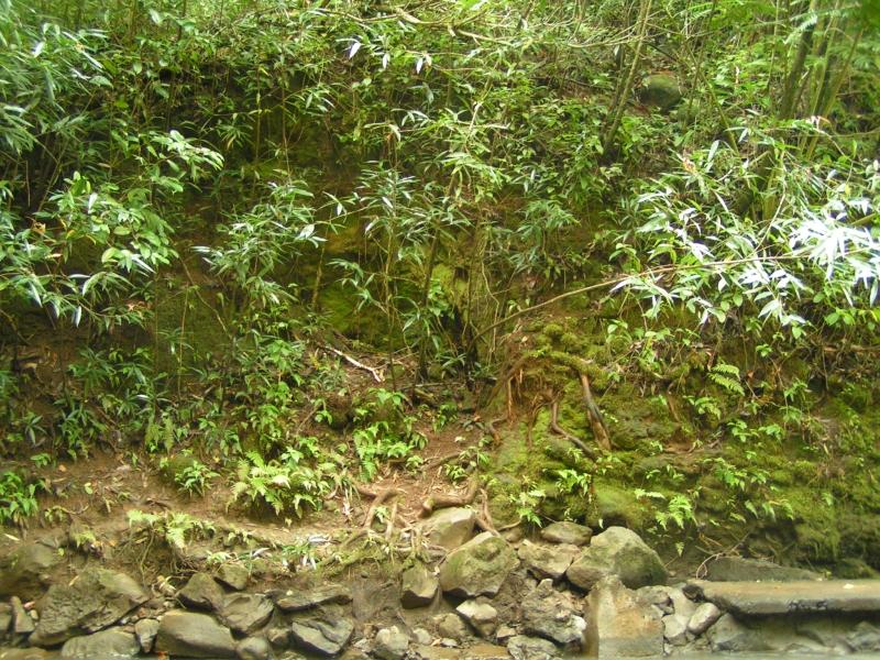 tf trees 21.jpg