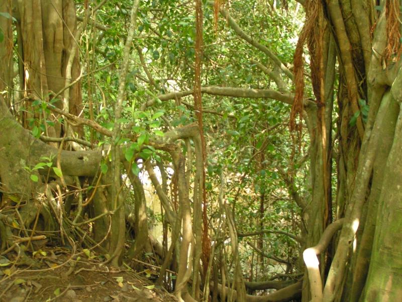 tf trees 3.jpg