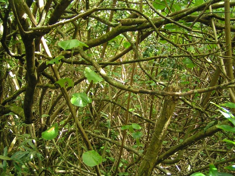 tf trees 5.jpg