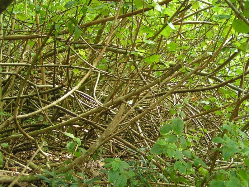 tf trees 6.jpg